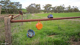 Picture of / about 'Booleroo Centre' South Australia - Pot Corner  (on map as Booleroo (Mount View))