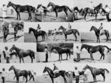 Picture relating to Gregory Downs - titled 'Collage of winners from the Gregory Downs Amateur Picnic Race Club Meeting, November 1933'