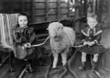 Picture relating to Cloncurry - titled 'Young girl and boy posing with a lamb at Cloncurry, Queensland, 1900-1910'