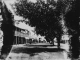 Picture relating to Mackay - titled 'Tree-lined Sydney Street, Mackay, Queensland, ca. 1913'