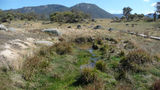 Picture relating to Bogong Creek - titled 'Bogong Creek'