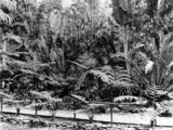 Picture relating to Brisbane - titled 'Fern Island in the Botanic Gardens, Brisbane, Queensland, ca. 1878'