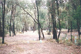 Picture relating to Lake Eildon National Park - titled 'Lake Eildon National Park; Lakeside Camp Ground '