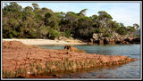 Picture of / about 'Bittangabee Bay' New South Wales - Bittangabee Bay