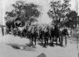 Picture relating to Stanthorpe - titled 'Horse team transporting a massive boiler for the Undercliffe Falls Mine, Stanthorpe'