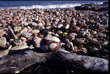Picture relating to Chichester Range - titled 'Pebble Beach, Exmouth'