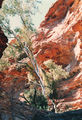 Picture of / about 'Kings Canyon' the Northern Territory - Kings Canyon