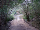 Picture of / about 'Megalong Valley' New South Wales -
