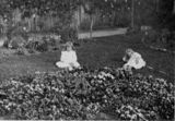 Picture relating to Queensland - titled 'Two young girls sit in a garden, 1900-1910'