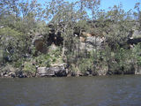 Picture relating to Shoalhaven River - titled 'Shoalhaven Riverbank upstream of Nowra'