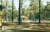 Picture relating to Killawarra - titled 'Killawarra State Forest, Forest Camp'