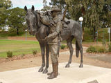 Picture relating to Tamworth - titled 'Waler Horse sculpture 1'