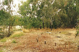 Picture relating to Tarrawingee - titled 'Tarrawingee: River Road Reserve, Ovens River'