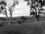 Picture relating to Red Hill - titled 'Panorama of snow on the Brindabellas, from Red Hill over Woden valley.'