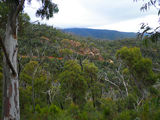 Picture relating to Namadgi National Park - titled 'Pipeline Road'