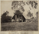 Picture relating to Ingham - titled 'Bachelor's quarters on a sugar plantation, Ingham, ca. 1881'