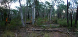 Picture relating to Little Black Mountain - titled 'Fallen trees on Little Black Mountain'