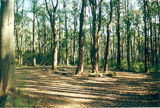 Picture relating to Twin Hills - titled 'Twin Hills informal bush camp, Toolangi State Forest'
