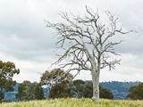 Picture relating to Oakey Hill - titled 'Oakey Hill'