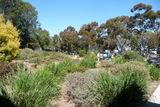 Picture relating to Parkes Radio Telescope - titled 'Parkes Radio Telescope Visitor Centre Gardens'