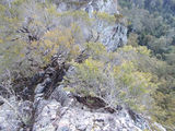 Picture relating to Dingo Peak - titled 'Dingo Peak cliff'