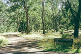 Picture relating to Wellington River - titled 'Wellington River; Alpine National Park, Breakfast Cr bush camp'