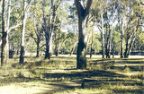 Picture relating to Cobram - titled 'Cobram Regional Park: Toms Beach'