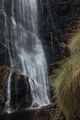 Picture relating to Mathinna Falls Forest Reserve - titled 'Mathinna Falls Forest Reserve'