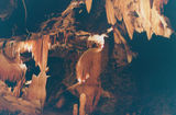 Picture relating to Buchan Caves - titled 'Buchan Caves'