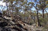 Picture relating to Chichester Range - titled 'Chiddarcooping Reserve'