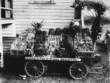 Picture of / about 'Brisbane' Queensland - Show exhibit for Campsie Fruit Farms at Ormiston, 1914