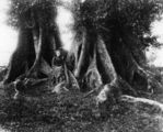 Picture relating to Kelvin Grove - titled 'Louisa and Wibrahem Hulme, posing in the buttress roots of a tree at Kelvin Grove, Brisbane'