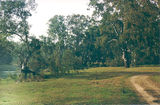Picture relating to Rutherglen - titled 'Rutherglen: Murray Rv Reserves - Shaws Flat'