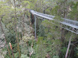 Picture relating to Weeaproinah - titled 'Treetop walk at Otway Fly'