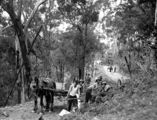 Picture of / about 'Mount Nebo' Queensland - Road construction workers on Mount Nebo Road, 1931