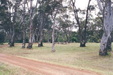 Picture relating to Cavendish - titled 'Cavendish picnic ground'