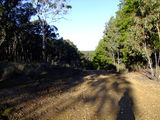 Picture of / about 'Mount David' New South Wales - Mount David - forestry road