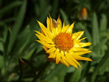 Picture relating to Mount Annan - titled 'Mount Annan Botanical Gardens 2'