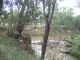 Picture relating to Mandagery Creek - titled 'Mandagery Creek'