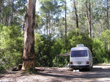 Picture of / about 'Bunyip State Park' Victoria - Bunyip State Park: Rysons Cr camp ground