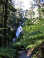Picture of / about 'Steavenson Falls' Victoria - Before Black Saturday