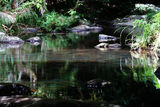 Picture relating to Springbrook National Park - titled 'Springbrook National Park'