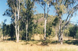Picture relating to Mount Scoria - titled 'Mount Scoria'