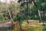 Picture relating to Howqua Hills Historical Area - titled 'Howqua Hills Historical Area; Blackbird Flat Camp Ground'