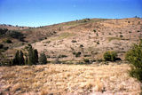 Picture relating to Adelong - titled 'Adelong'