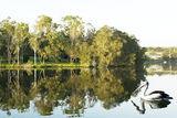 Picture relating to Rathmines - titled 'Pelican Reflections. Rathmines Park. Landscope photo art.'