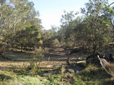Picture relating to Narayen Csiro Pastoral Research Station - titled 'Narayen Csiro Pastoral Research Station'