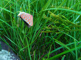 Picture relating to Little Black Mountain - titled 'Colourful butterfly or moth resting in grass'