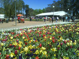 Picture relating to Canberra - titled 'Floriade 2008'