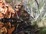 Picture relating to Rudall River National Park - titled 'Rudall River National Park, Pool No 4'